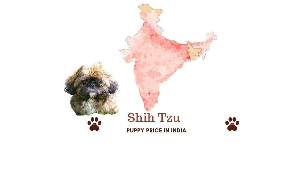 Shih Tzu price in India across all major Indian cities