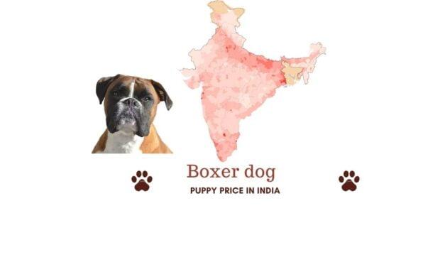 Boxer dog price in India [Price in Chennai, Mumbai, and more]
