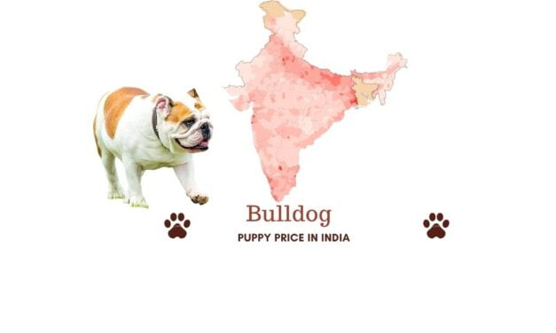 Bulldog price in India across all major Indian cities
