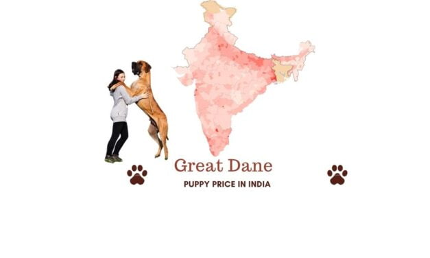 Great Dane price in India across all major Indian cities