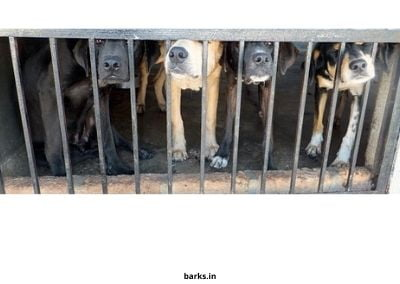 Dogs in a puppy mill