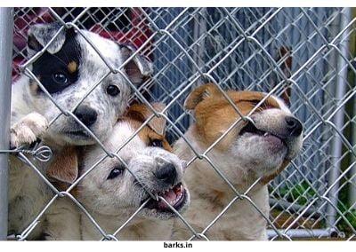 Puppies in puppy farm