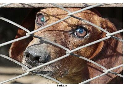 Puppy farm dog cage