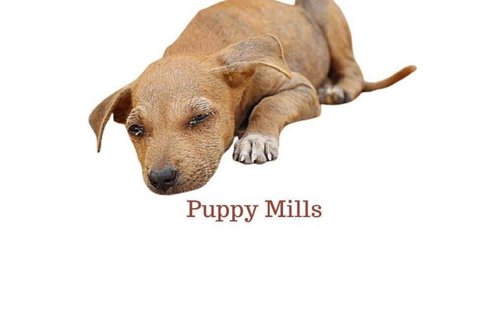 Buyers beware – Puppy mills and backyard breeders in India