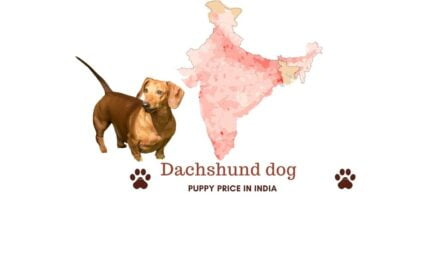 Dachshund price in India