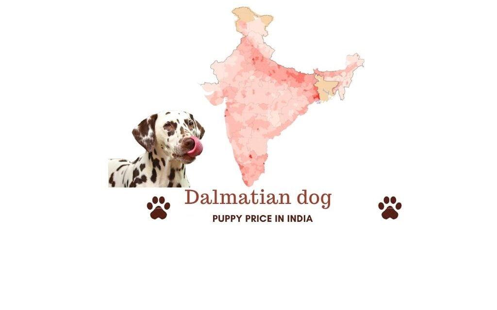 Dalmatian price in India